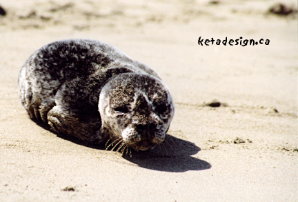 Seal1-3