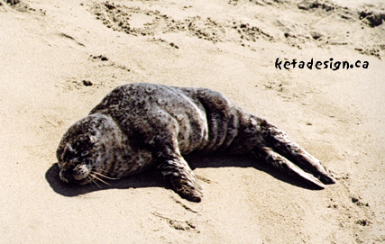 Seal1-4