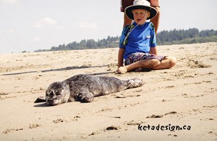 Seal1-6