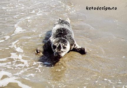 Seal1-9
