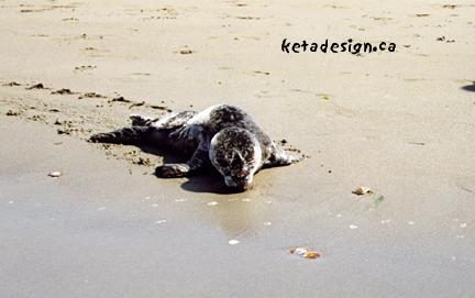 Seal1-10
