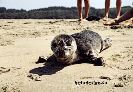 Seal1-5