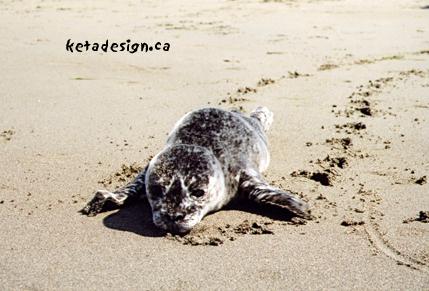 Seal1-7