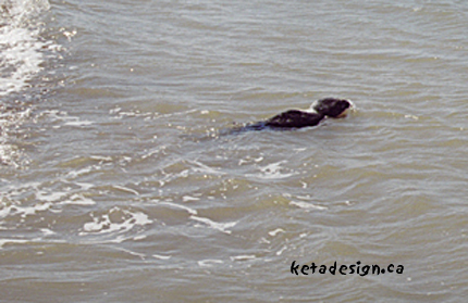 Seal1-11