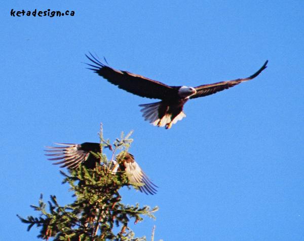 Eagle_Mates_Play1