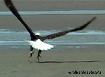 EagleTakeOff1