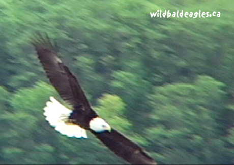 EagleFly2