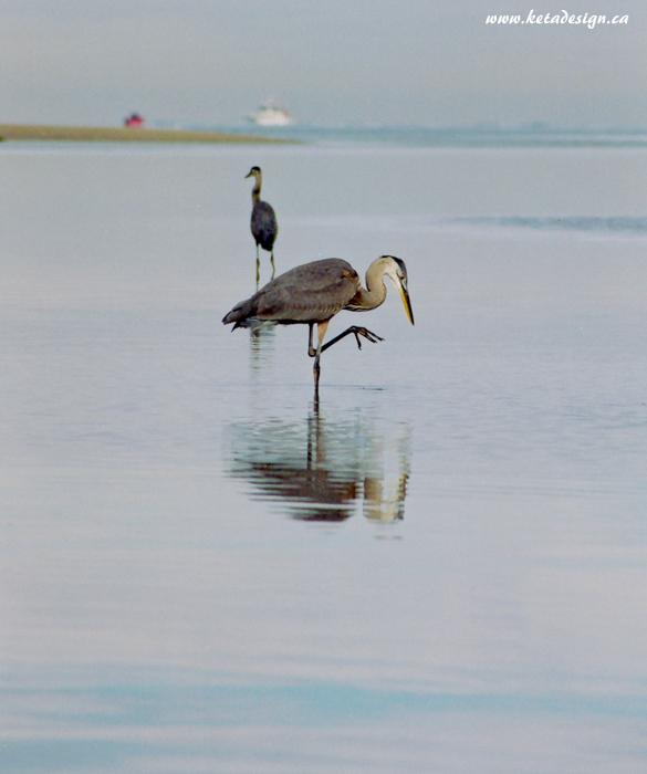 Heron2_1