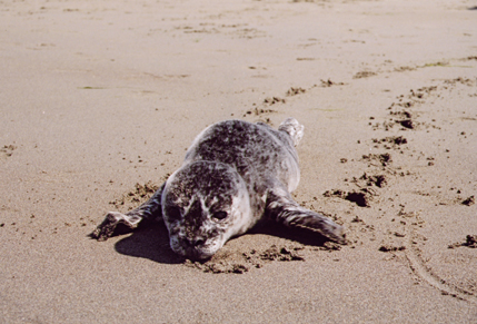 Seal10