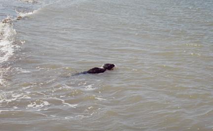 Seal14