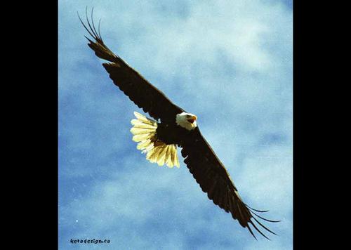 Eagleangle_2
